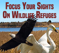 Focus Your Sights On Wildlife Refuges